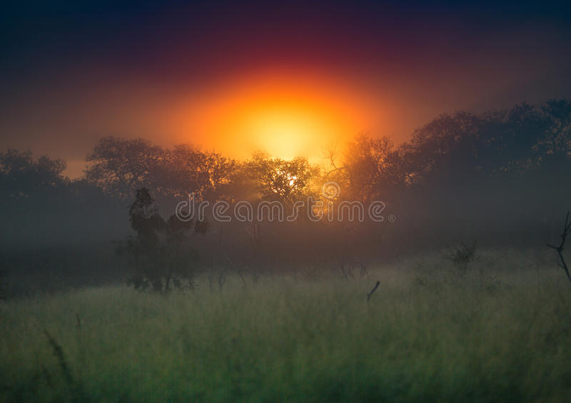 The rising sun over the Hlane-Royal National Park. Swaziland stock image
