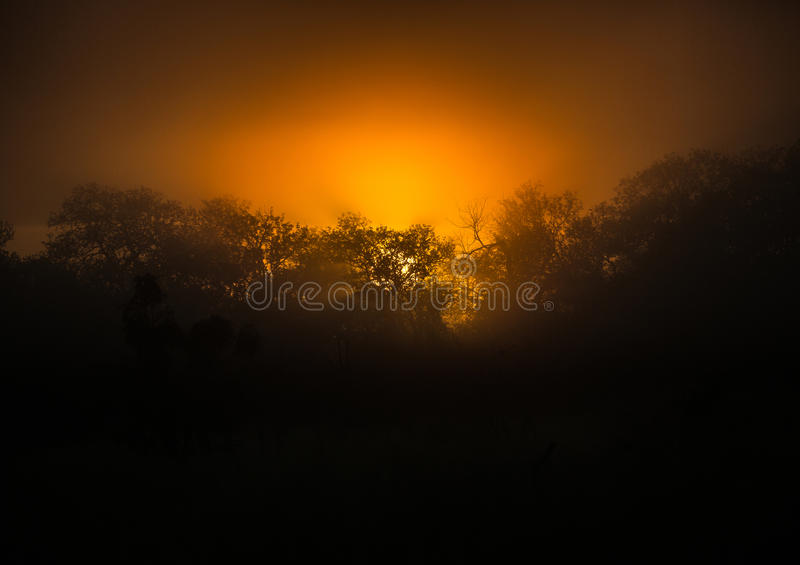 The rising sun over the Hlane-Royal National Park. Swaziland royalty free stock photo