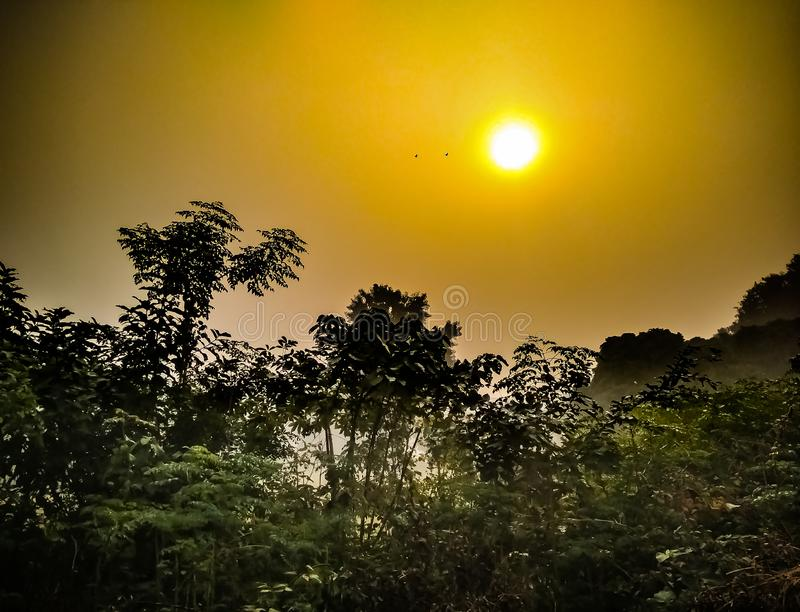 Rising sun. With golden view royalty free stock image