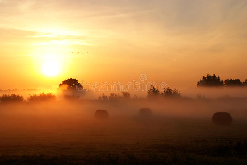 Rising sun. royalty free stock photos