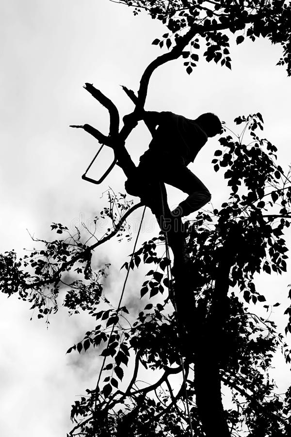 Risk of lumberjack. Job in countryside of Thailand stock photo