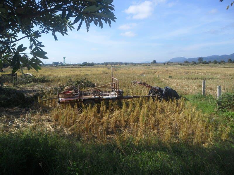 Riso di taglio della manodopera agricola fotografie stock libere da diritti