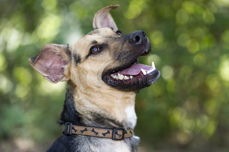 Riso feliz do cão imagens de stock