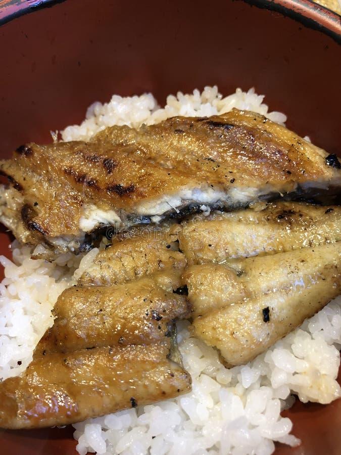 Riso giapponese dell'anguilla fotografie stock