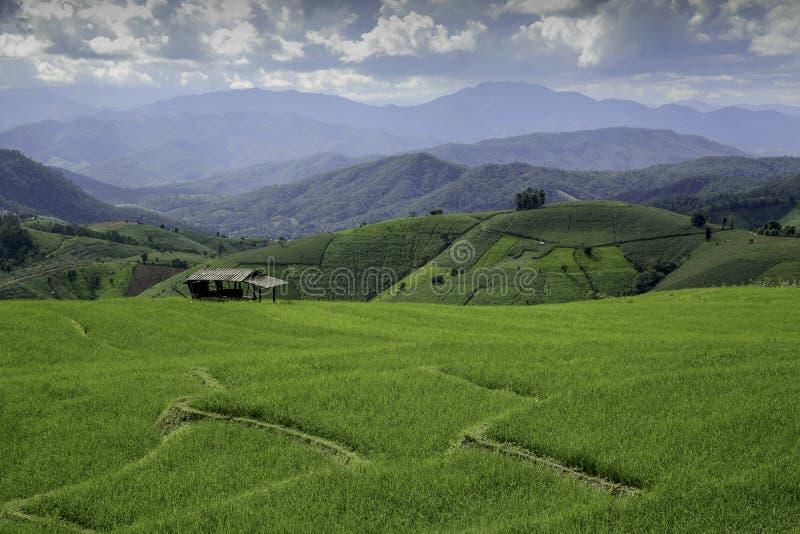 Riso Paddy Fields in Tailandia fotografia stock