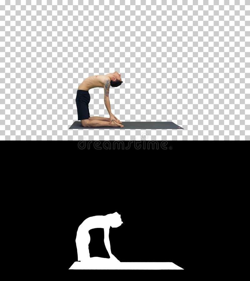 Risolvere del giovane, yoga, pilates o addestramento sportivi di forma fisica, stante nel ushtrasana di asana, in Ustrasana o nel immagine stock libera da diritti