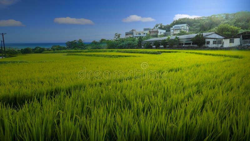 Risone verde con il cielo piacevole e la vista immagine stock
