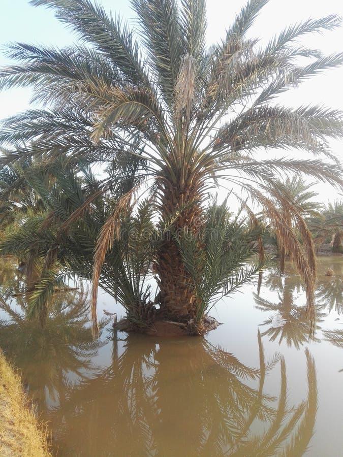 rissani的棕榈 免版税库存照片