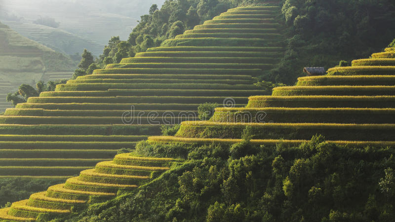 Risterrass på moutainen i Vietnam arkivfoto