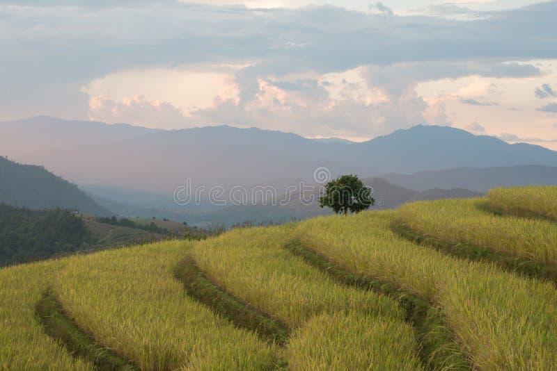 Risterrasser i nordliga Thailand arkivbilder