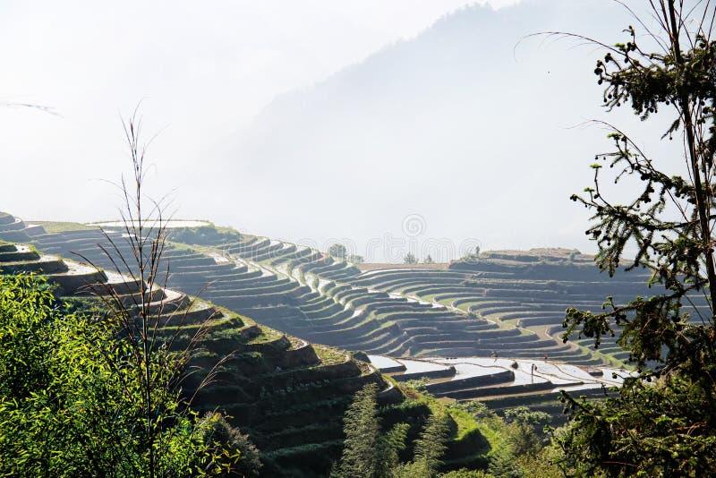 Risterrasser i Ping An Guilin China arkivbild