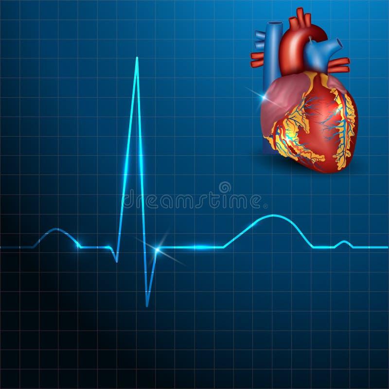 Ritmo humano do coração em um fundo azul bonito  ilustração do vetor