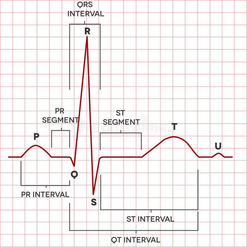 Ritmo normal da cavidade do coração humano, eletrocardiograma ilustração do vetor