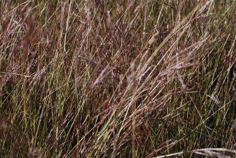 Ritorno alto di area delle erbe di prateria a Dallas Parks fotografia stock