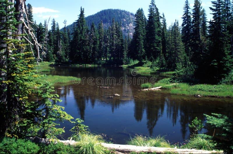 Ritratti dell'Oregon immagini stock libere da diritti