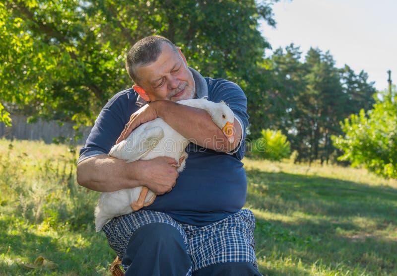 Ritratto all'aperto degli amici dolci - uomo senior e la sua oca bianca sveglia sulle mani fotografia stock libera da diritti