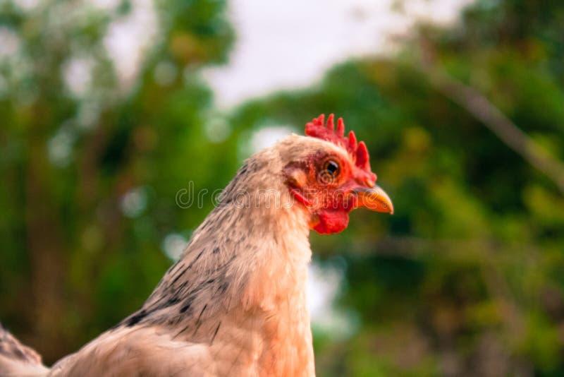 Ritratto animale fotografie stock libere da diritti