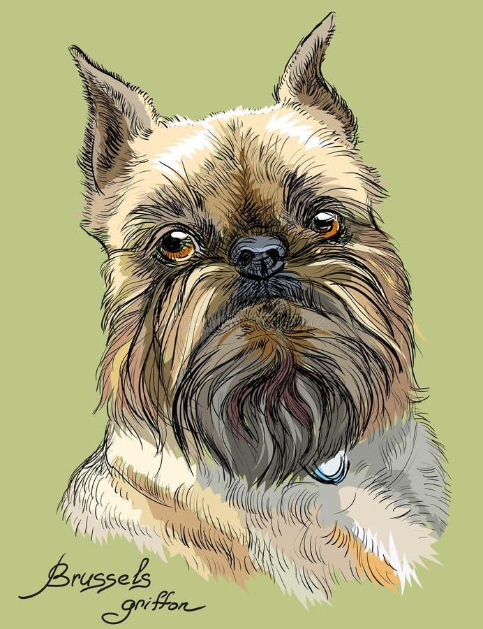 Ritratto colorato di vettore del cane di grifone di Bruxelles illustrazione di stock