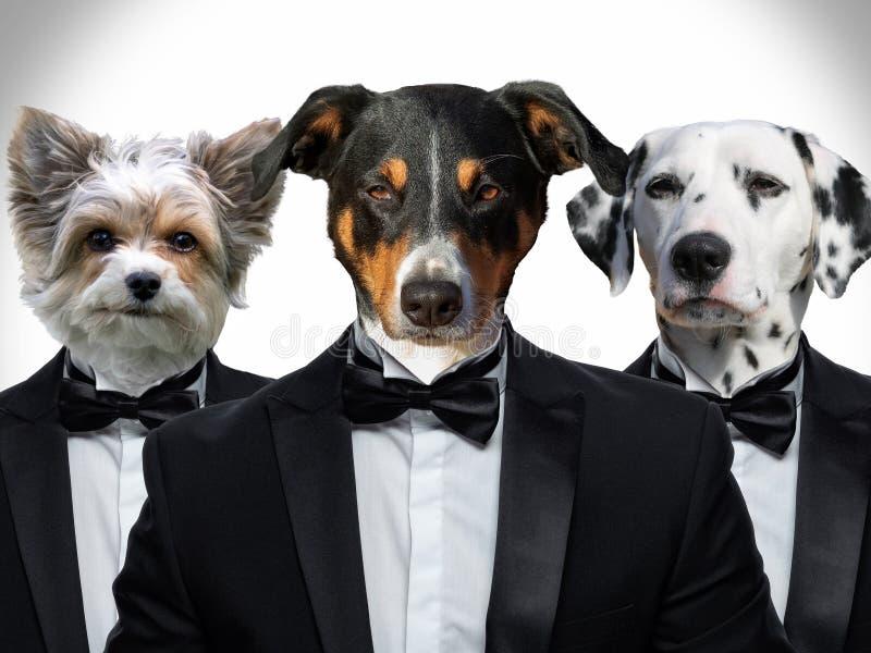Ritratto dei cani in un vestito fotografia stock