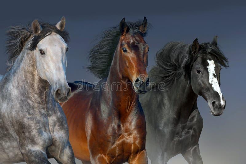 Ritratto dei cavalli nel moto immagini stock