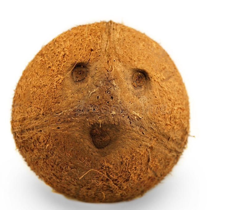 ritratto dei cocos fotografia stock libera da diritti