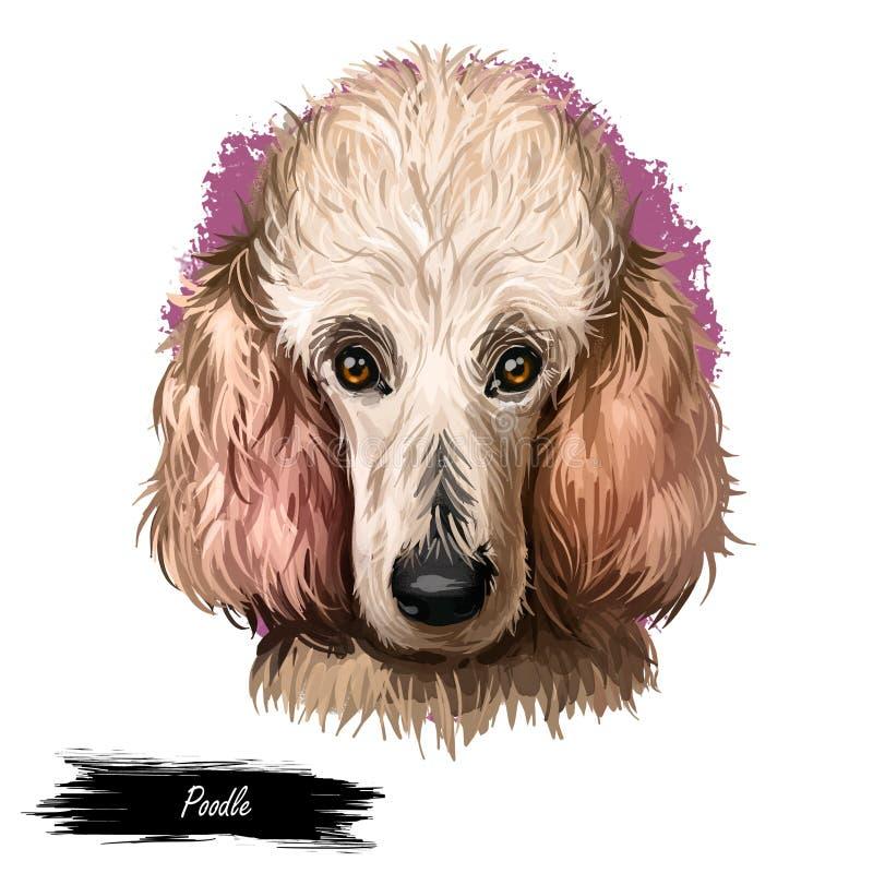 Ritratto del barboncino isolato su bianco Illustrazione di arte di Digital del cane disegnato a mano per il web, la stampa della  illustrazione di stock