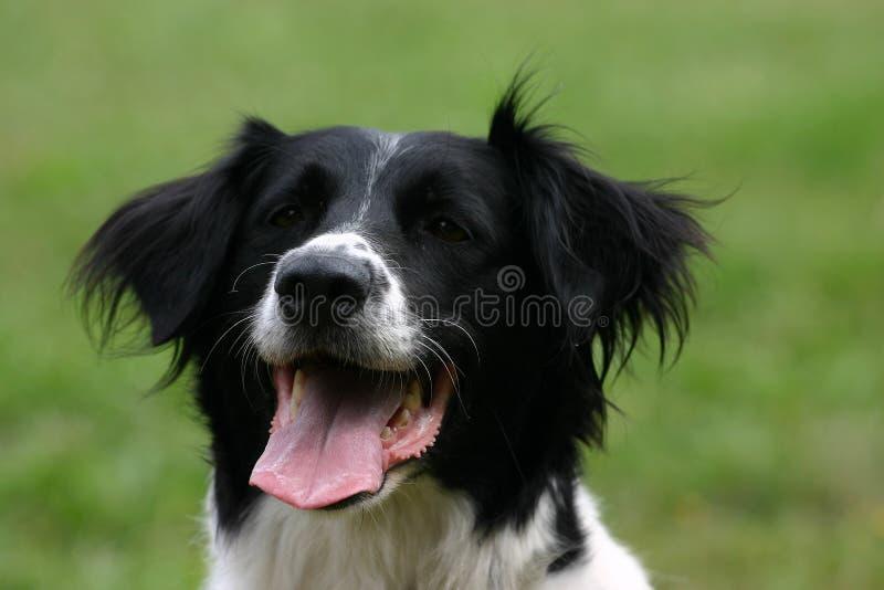 Ritratto del cane immagine stock