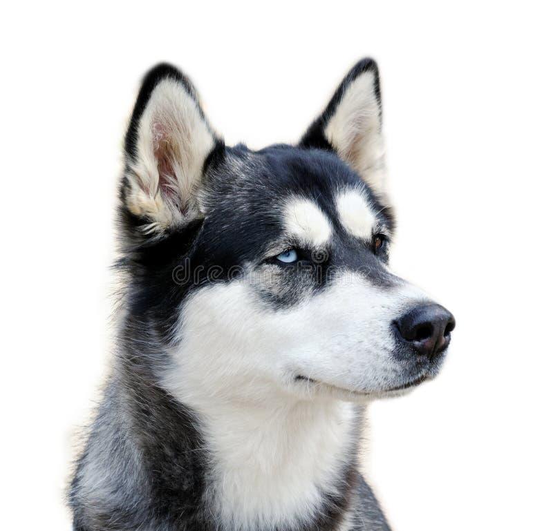 Ritratto del cane. immagine stock libera da diritti