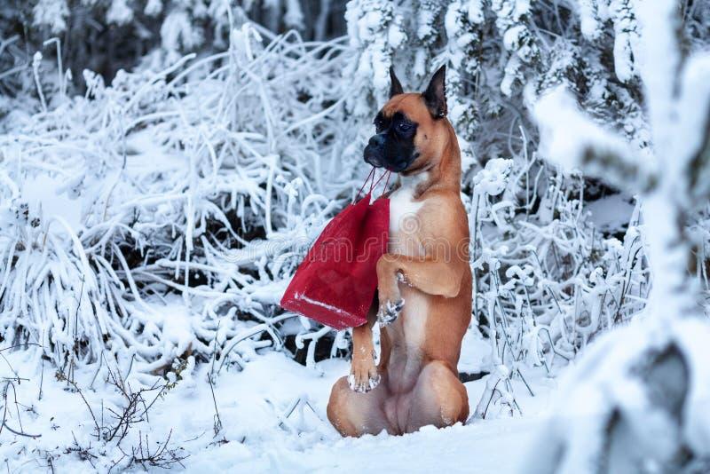 Ritratto del cane nel fondo degli alberi di Natale immagine stock
