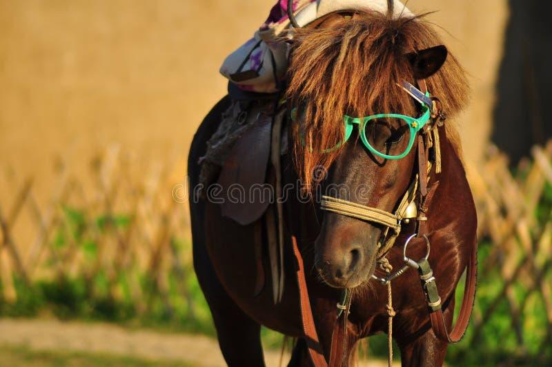 Ritratto del cavallo fotografie stock libere da diritti