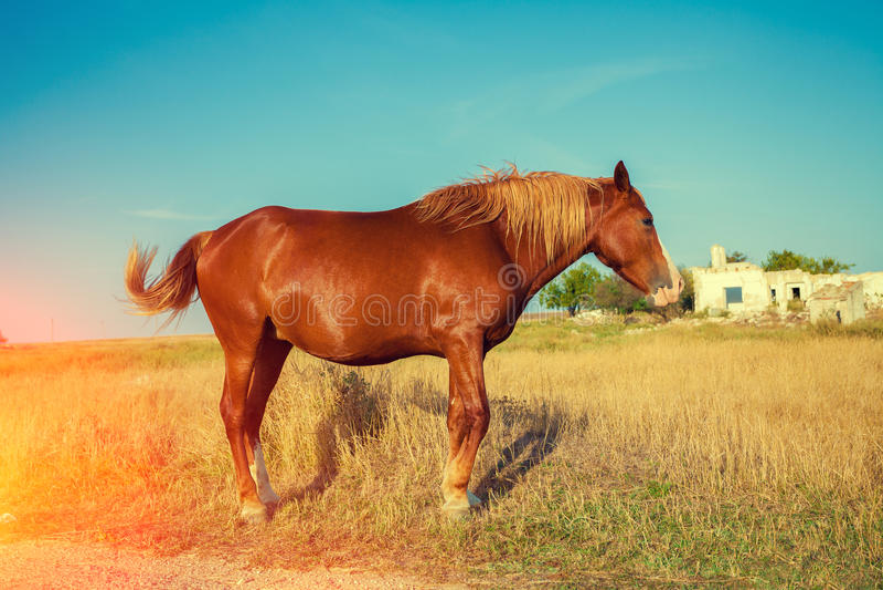 Ritratto del cavallo all'aperto immagini stock libere da diritti