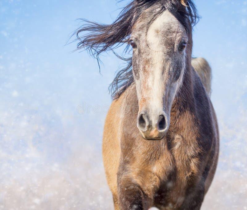 Ritratto del cavallo con la criniera di sviluppo il giorno e la neve dell'inverno fotografia stock libera da diritti