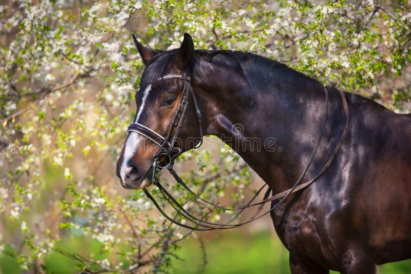 Ritratto del cavallo di baia nel fiore di primavera fotografie stock