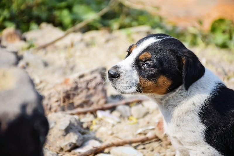 Ritratto del cucciolo nel modo emozionale Expectational, ritenente immagine stock