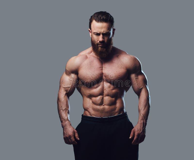 Ritratto del culturista senza camicia barbuto immagine stock