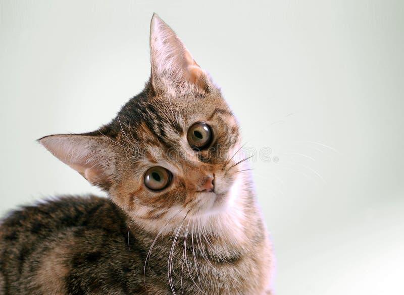 Ritratto del gatto immagine stock immagine di animale - Immagine del gatto a colori ...