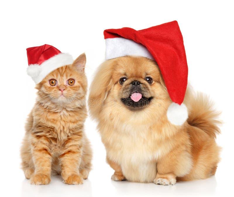 Ritratto del gatto e del cane in spiritello malevolo di Santa fotografia stock libera da diritti