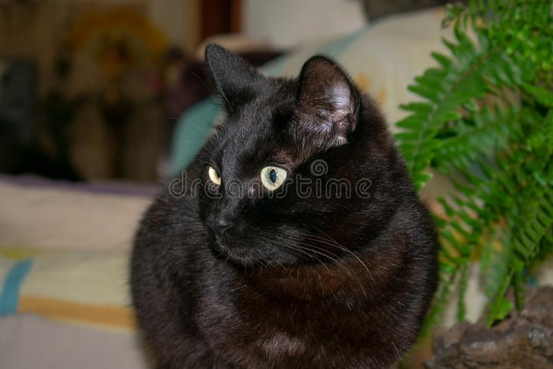 Ritratto del gatto nero accanto ad una pianta fotografia stock