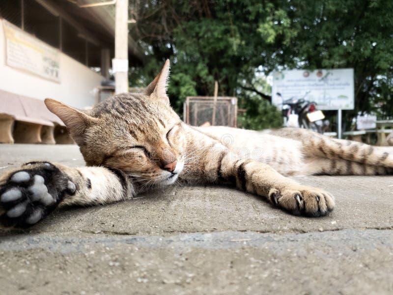 Ritratto del gatto sveglio che dorme sul pavimento fotografie stock