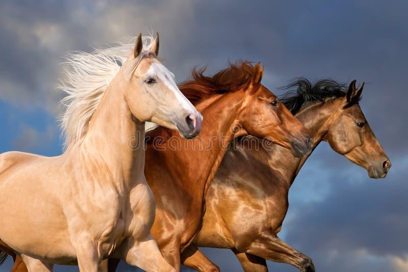 Ritratto del gregge del cavallo fotografie stock