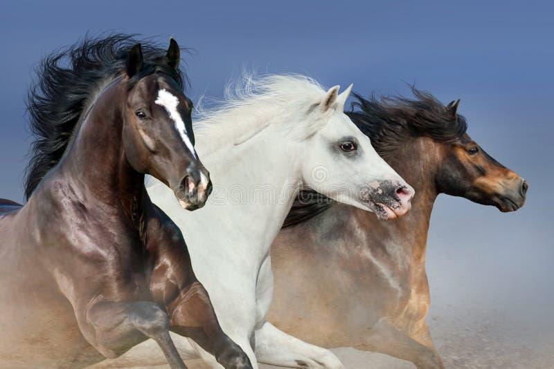 Ritratto del gregge del cavallo fotografia stock