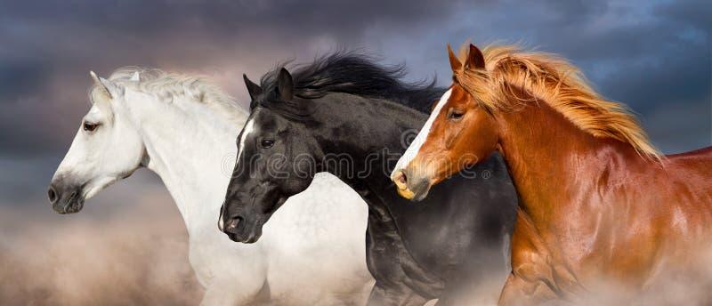 Ritratto del gregge del cavallo fotografie stock libere da diritti