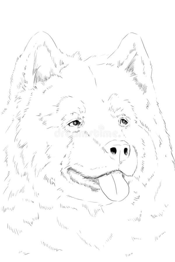 Ritratto del Malamute, scetch. Disegno a matita immagine stock libera da diritti