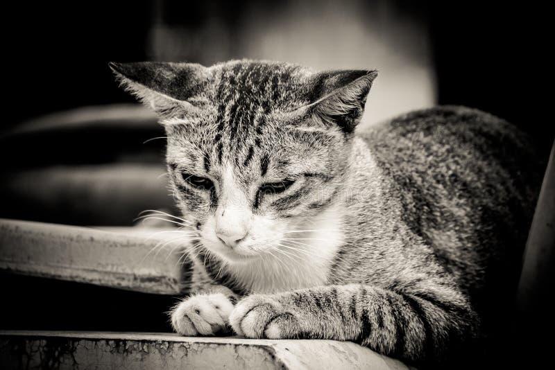 Ritratto del primo piano del gatto solo triste immagine stock libera da diritti