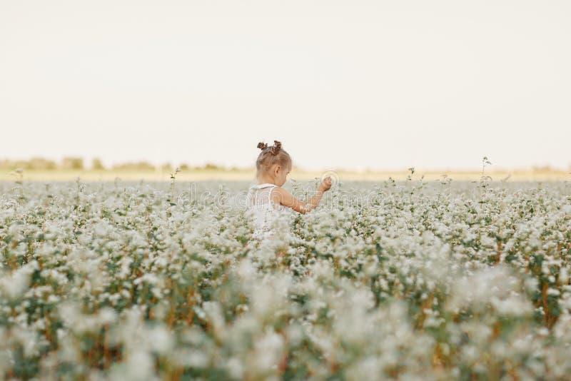 Ritratto del ` s dei bambini di una ragazza bella ragazza in un campo di fioritura Gioco della ragazza nel giacimento del dente d fotografia stock