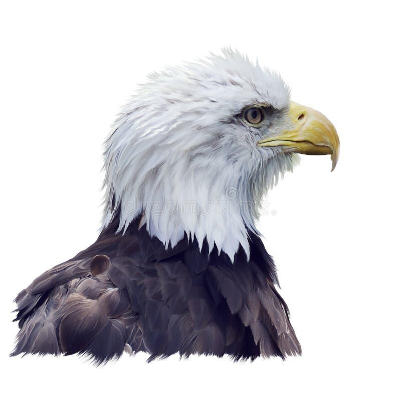 Ritratto dell'acquerello dell'aquila calva fotografia stock libera da diritti