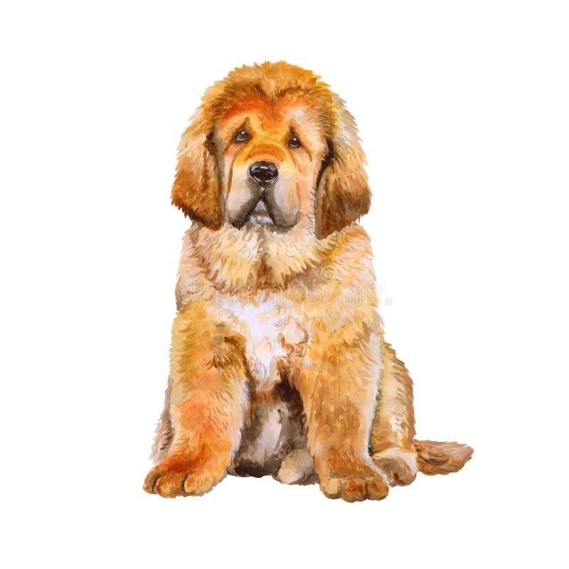 Ritratto dell'acquerello del cane della razza del mastino tibetano su fondo bianco Animale domestico dolce disegnato a mano fotografia stock libera da diritti