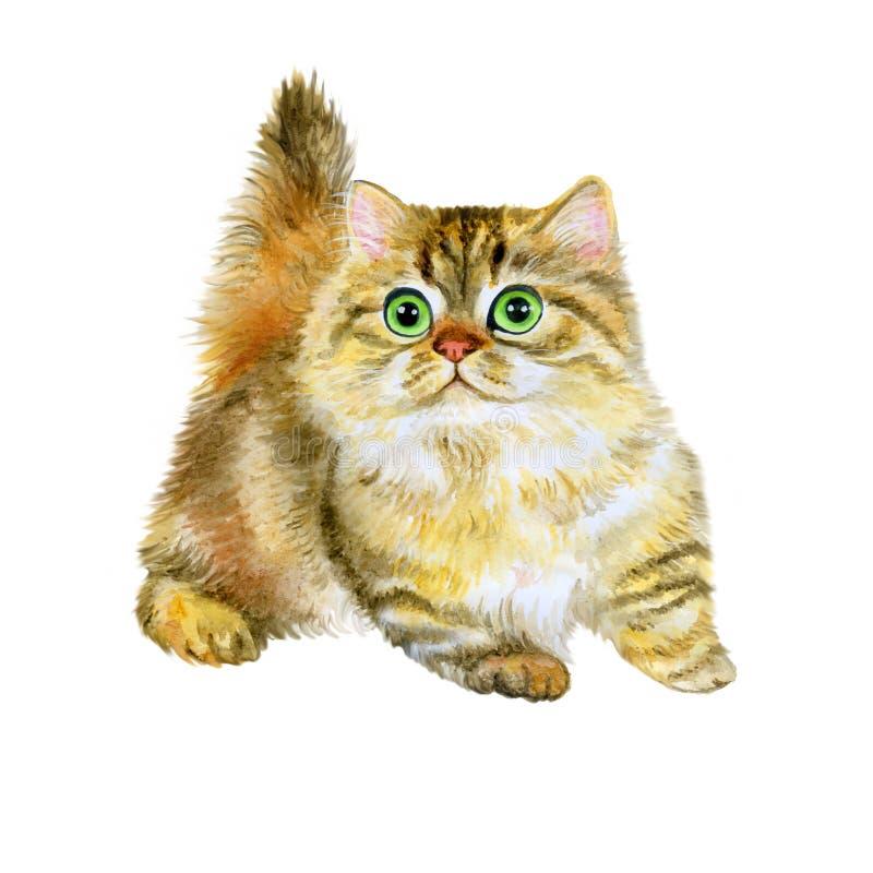 Ritratto dell'acquerello del minuetto o del gattino sveglio di millefoglie su fondo bianco fotografie stock libere da diritti