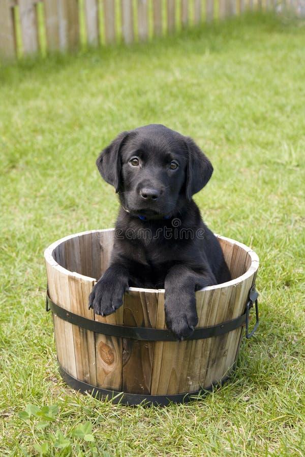 Ritratto dell'animale domestico fotografia stock