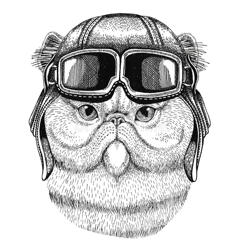 Ritratto dell'aviatore di cuoio d'uso lanuginoso del casco del gatto persiano, motociclista, illustrazione disegnata a mano del m illustrazione vettoriale